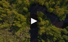 Dogwood Alliance and Sierra Club produced an informational video on the damage forest harvesting is doing to parts of eastern North Carolina. (Hendy Street Produxions)