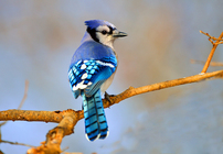 Scientists and naturalists expect to use information from the recent City Nature Challenge to better understand and protect the natural world. (briankushner/traveisaudubon.org)