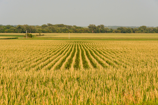 PHOTO: Those who rely on local and fresh foods in Iowa are asking for more careful application of pesticides by farmers who use them on their crops. Photo credit: Carl Wycoff/Flickr