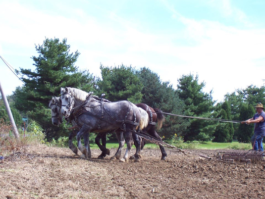 Mud Run Farm in Stark County uses horsepower to reduce emissions linked to a warming climate. Photo courtesy of Mud Run Farm.