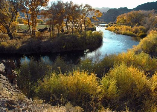 PHOTO: A $3.8 million federal grant is helping researchers at the University of Nevada study how to meet growing demand with a declining water supply. Photo credit: U.S. Fish and Wildlife Service.