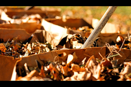 PHOTO: As Iowans take care of outside fall chores, a reminder that products labeled as compostable, such containers and cups, are not to be mixed in with yard waste such as leaves and weeds. Photo credit: Phil Roeder/Flickr.