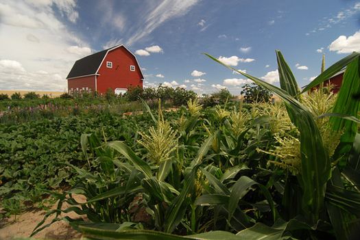 PHOTO: Changes to USDA loan programs have increased their flexibility, and could help more beginning farmers develop their faming business and grow a profit. Photo credit: Ron Nichols/NRCS.