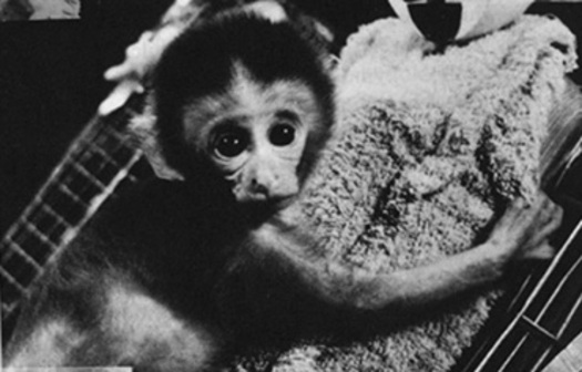 PHOTO: The Animal Legal Defense Fund (ALDF) has filed a lawsuit against the University of Wisconsin–Madison over what the group claims is lack of transparency regarding its planned testing of baby primates. Photo courtesy of the Animal Legal Defense Fund.