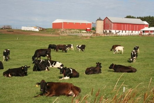 Outrage Generated By Alleged Animal Abuse At Wi Dairy Farm