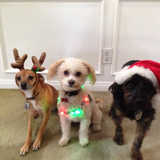 PHOTO: Animal advocates hope people will adopt pets this holiday season to save lives, as they point out that thousands of dogs and cats are euthanized every year in Massachusetts. Photo credit: Melissa Gelmo.
