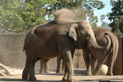 PHOTO: Elephants at the Buffalo Zoo, here in a 2007 photo, are among those in three New York zoos on this year's 'Ten Worst Zoos for Elephants' list released by an animal-rights group. Photo credit: amerune/Flickr.com.