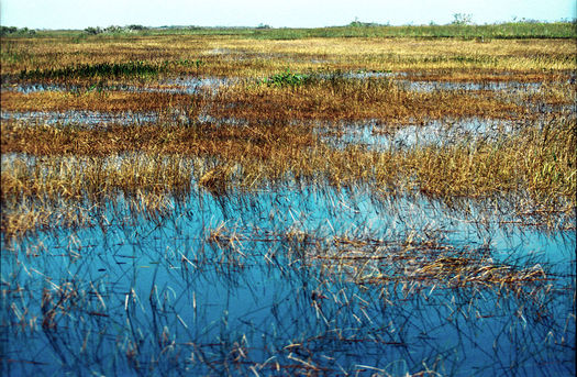 PHOTO: The famed River of Grass is seen in this depiction, Everglades57(js) by Jerzystrzelecki. Restoring the Everglades is one of Florida's top environmental priorities, says Gov. Rick Scott. Photo credit: Jerzystrzelecki, CC BY 3.0, Wikimedia Commons.