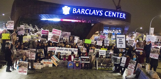 PHOTO: Animal rights activist plan to protest tonight's opening of the circus at the Barclays Center. They say it sends the wrong message to kids about ethical treatment of animals. Courtesy: Cappiello PETA