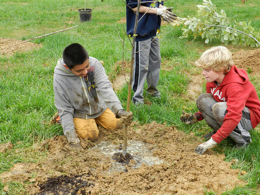 PHOTO: Tree plantings are among the 83 projects being funded with a new round of grants from the Chesapeake Bay Trust. Photo courtesy of the Chesapeake Bay Trust.