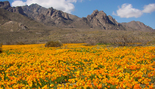 PHOTO: A new report says more Americans are retiring to communities in the West, like Las Cruces, that are home to protected public lands, such as the Organ Mountains-Desert Peaks National Monument. Photo courtesy of U.S. Fish and Wildlife Service.