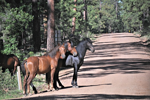 PHOTO: Abandoning horses and some other animals would no longer be a crime in Arizona if Gov. Doug Ducey signs a bill that has passed the House and Senate. Photo credit: U.S. Department of Agriculture