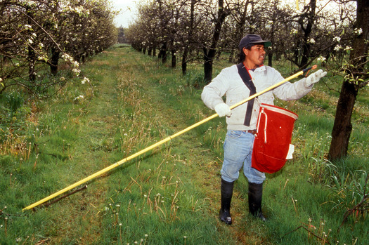 PHOTO: Better treatment of Idaho farmworkers and recognition of their importance in the food system are part of the National Farmworker Awareness campaign. Photo credit: Brian Prechtel, USDA Agricultural Research Service.
