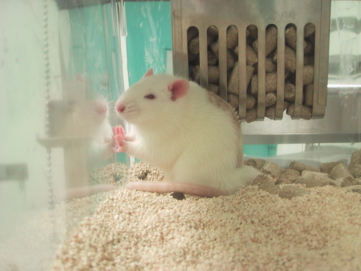 U.S. cosmetic companies, once cruelty free, are testing on animals in China in order to sell products there - unbeknownst to many U.S. consumers. Credit: PETA