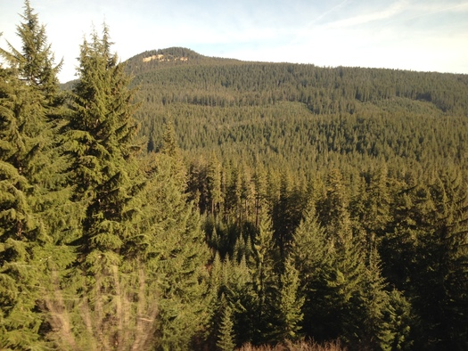 PHOTO: Oregon's densely forested O-and-C lands encompass slightly more than 2.6 million acres, and the Bureau of Land Management wants more public input as it updates the master plan to manage them. Photo credit: Chris Thomas