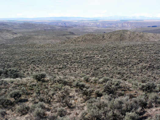 PHOTO: In Washington, greater sage-grouse can be found on less than 10 percent of their original turf, as expanses of wide-open sagebrush steppe have become more scarce. Photo courtesy Washington Department of Fish and Wildlife.