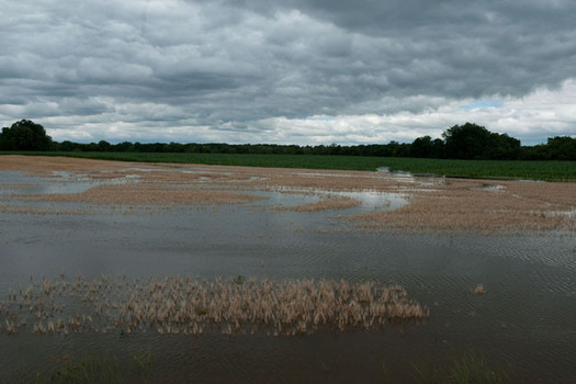 PHOTO: With the heavy rainfall the past two weeks in Ohio, farmers around the state are reporting flooded fields, which some experts say is connected to the changing climate. Photo credit: Lance Cheung for the USDA/Flickr.