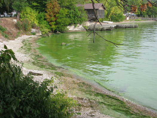 Lessons from organic farming may help solve Ohio�s toxic and unsightly algae problems. Courtesy NOAA Great Lakes Environmental Research Laboratory.