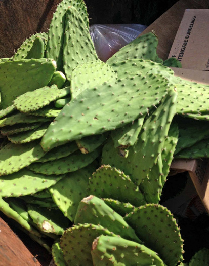 Cactus pads, or nopales, are part of a state crackdown on pesticide-tainted produce. Courtesy of California Dept. of Pesticide Regulation.