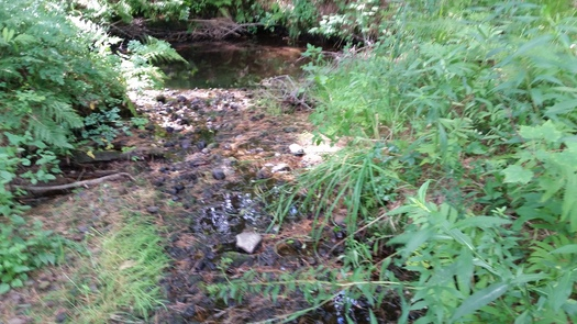 New Hampshire conservationists say streams such as this one in Epsom should return to cooler temperatures under the new EPA Clean Power Plan, which will benefit native brook trout and other local fish and wildlife. Credit: Eric Orff/National Wildlife Federation.
