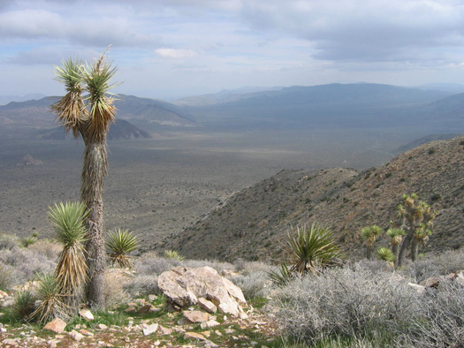 Environmental advocates are pushing for more zero-emissions vehicles and changes to the EPA's Regional Haze Program in the wake of a new report that gives California national parks like Joshua Tree failing grades for air quality. Credit: Tommy Hough.