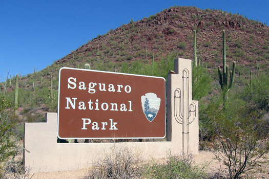 Saguaro National Park, divided in eastern and western units on either side of Tucson, is home to Arizona's most iconic cactus, which is also among the world's rarest. Courtesy: National Park Service