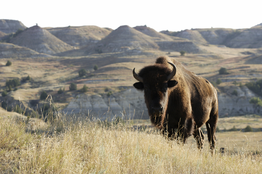 The U.S. Forest Service is being sued for approving a large gravel mine adjacent to Theodore Roosevelt National Park's Elkhorn Ranch. Credit: Eric Foltz.