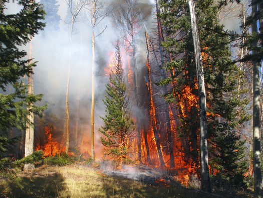 Forest fire. Credit: ellend1022/iStock