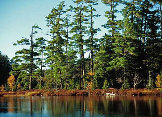 The Land and Conservation Fund helps protect the Ottowa National Forest. Credit: Joseph O'Brien, USDA Forest Service