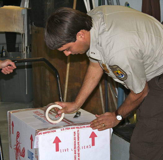 A shortage of U.S. Fish and Wildlife inspectors and a lack of public awareness are factors in the ongoing wildlife trafficking crisis, according to a new report. Credit: U.S. Fish and Wildlife Service.