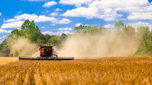 The Minnesota Farmers Union will be debating how several national policies will affect local food producers this weekend. Credit: Jackske/Morguefile.com