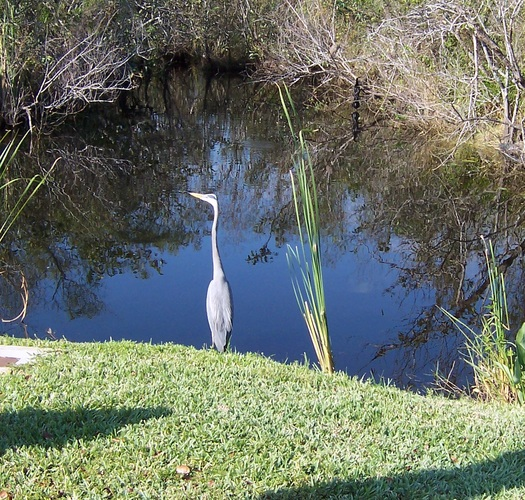 Dozens of environmental groups say they're thankful protections for Florida streams and wetlands remain in place. Credit: Bandini/morguefile.com