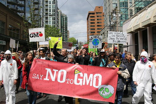 Polls show that more than 90 percent of Americans want GMO labeling. Credit: Rosalee Yagihara/Wikimedia.org