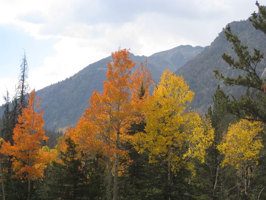 Less than a month remains for the public to chime in on a proposal to expand coal mining on 20,000 acres of protected National Forest lands in Colorado. (USFS)