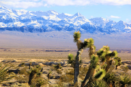 A new poll shows Nevadan are extremely concerned about drought, and place great value on federal public land such as the Tule Springs Fossil Beds National Monument. (Alan O�Neill/Outside Las Vegas Foundation)