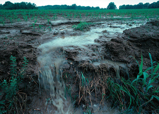 Agriculture is the major source of nitrogen and sediment pollution.  (Lynn Betts/Wikimedia Commons)