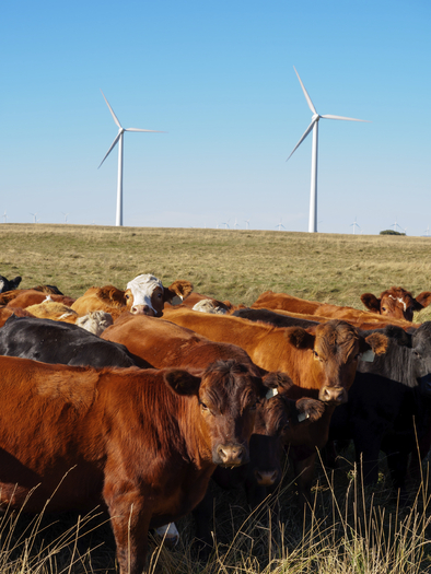 Rural Minnesotans will be talking about local climate change solutions this week. (iStockphoto)