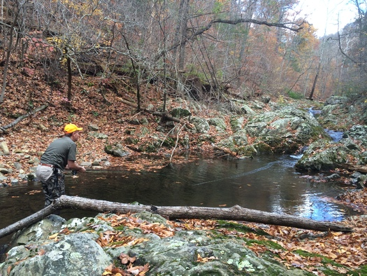 Conservationists want national monument status for the Birthplace of Rivers wilderness in eastern West Virginia. (Trout Unlimited)
