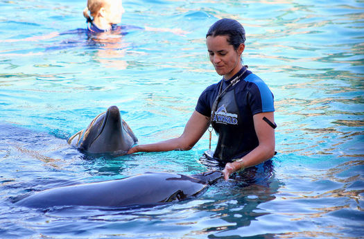 A trainer works with dolphins at a SeaWorld park. The company recently admitted that some of its employees infiltrated and spied on PETA activities. (Wikimedia Commons)