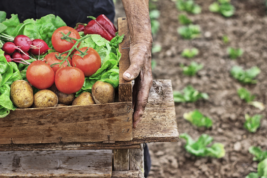 Organic farmers can start applying for a program to help them pay for conservation buffers on their lands. (iStockphoto)