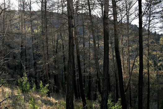 A changing climate is altering the ability of Rocky Mountain forests to recover from wildfire, according to a new study. (Pixabay)