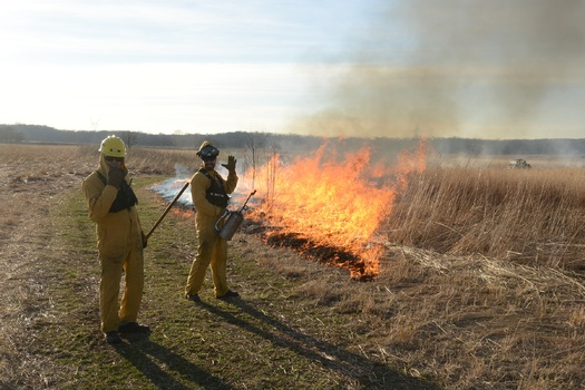 The Illinois Prescribed Fire Council says landowners should be burning at least 213,000 more acres each year to protect wildlife habitats from invasive plants. (Ferran Salat Coll/The Nature Conservancy)