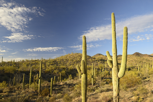 Saguaro National Park near Tucson is part of Arizona's 12.2 million acres of public lands available for recreation. (aimintang/iStockphoto)