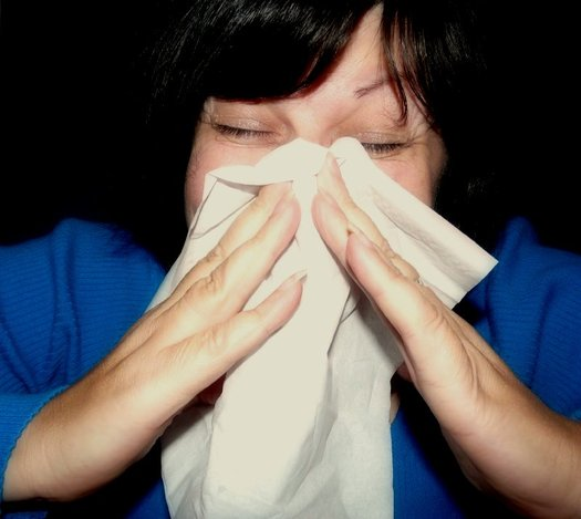 Seasonal allergic rhinitis, or hay fever, affects more than 35 million people in the United States annually. (mcfarlandmo/Wikimedia Commons)