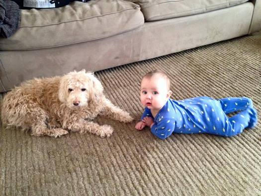 The Hygiene Hypothesis is that most folks aren't protecting themselves from allergies because they're so clean. One suggestion is that small children be exposed to pets on a regular basis. (Brad Robinson)