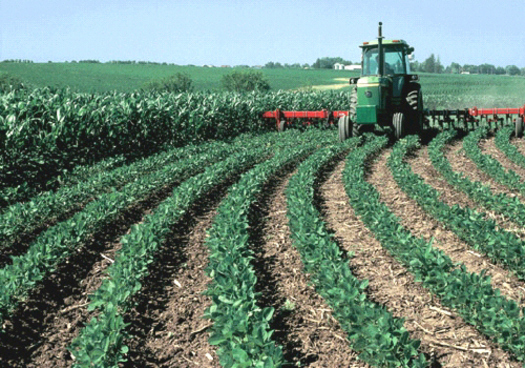Large and small farms in Arkansas could be targeted by cyber thieves.(USDA)