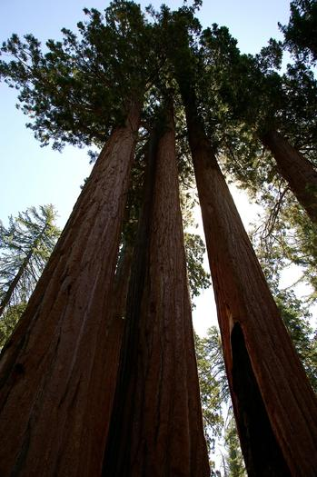 The U.S. Senate voted Wednesday to permanently reauthorize the Land and Water Conservation Fund, which supports places such as Sequoia National Park. (michaelkirch/morguefile)