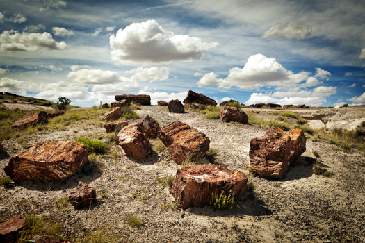 The ancient Petrified Forest near Holbrook is one of Arizona's iconic national parks. (iStockphoto)