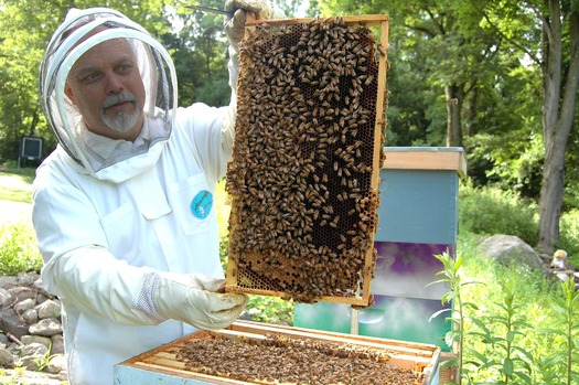Beekeepers' colonies have been in decline for the past decade, and a new federal survey says last year was no exception. (pixabay)
