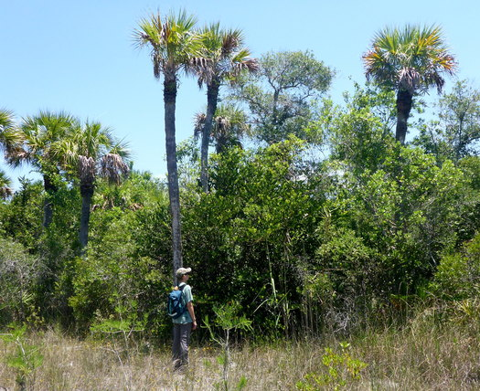 Advocates fear the impact of oil testing in the Big Cypress National Preserve. (M. Schwartz)